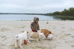 La petite fille forme ses chiots à la plage en automne Un enfant joue avec ses petits bouledogues Photos stock