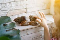 La petite fille joue avec deux grands escargots d'Achatine Photographie stock libre de droits
