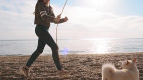 La petite fille joue avec le bâton avec son animal familier blanc étonnant d'inu de shiba près du mouvement lent de mer banque de vidéos