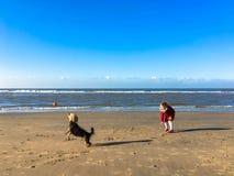La petite fille joue avec le chien sur la plage Photos stock