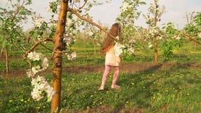 La petite fille marche autour du champ de pommiers banque de vidéos