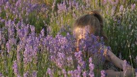 La petite fille mignonne étreignant le buisson de la lavande fleurit sur le coucher du soleil d'été banque de vidéos