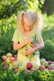 La petite fille mignonne avec les cheveux blonds rassemble les pommes dispersées images libres de droits