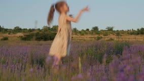 La petite fille mignonne danse par espièglerie parmi le beau gisement de lavande au coucher du soleil banque de vidéos