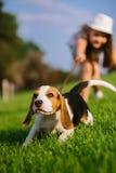 La petite fille mignonne joue avec son chien en parc vert Photographie stock libre de droits