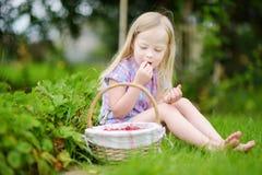 La petite fille mignonne sélectionnant les fraisiers communs frais sur la fraise organique cultivent Image libre de droits