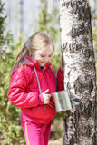 La petite fille rassemble la sève de bouleau en bois Images stock