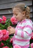 La petite fille regarde les roses de floraison Photos stock