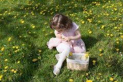 La petite fille sur la pelouse de pissenlit prennent des pissenlits dans un panier Photos libres de droits