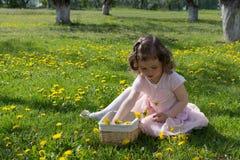 La petite fille sur la pelouse de pissenlit prennent des pissenlits dans un panier Photo libre de droits