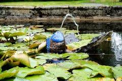 La petite fontaine d'étang sous forme de poisson photographie stock libre de droits