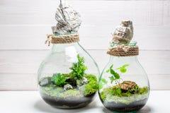 La petite forêt tropicale dans un pot, sauvent l'idée de la terre Image libre de droits