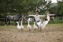 La petite jeune fille drôle dans le chandail blanc court un troupeau des oies reléguant ses mains vers Portrait de mode de vie Image libre de droits