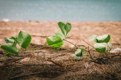 La petite plage plante l'élevage sur le sable et le fond de mer Images libres de droits