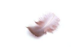 La petite plume sur un fond blanc Photo stock