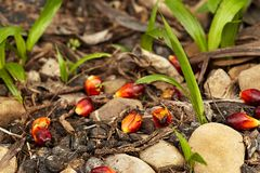 La petite pousse verte de paume d'arbre plante l'élevage dans la forêt Image stock