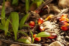 La petite pousse verte de paume d'arbre plante l'élevage dans la forêt Images libres de droits