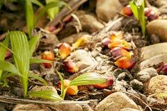 La petite pousse verte de paume d'arbre plante l'élevage dans la forêt Image libre de droits