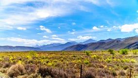 La petite région de Karoo de la province du Cap-Occidental de l'Afrique du Sud avec les montagnes de Grootswartberg sur l'horizon Images libres de droits