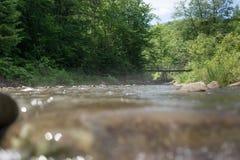 La petite rivière dans la perspective du bois Image libre de droits