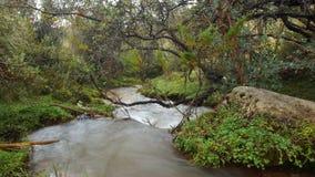 La petite rivière dans une forêt de Polylepis a placé dans l'amarrage de la visibilité directe écologique Ilinizas de réservation Photographie stock libre de droits