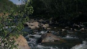 La petite rivière de montagne banque de vidéos