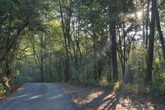 La petite route dans la forêt Image stock