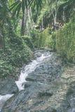 La petites cascade et pierre avec de l'eau font signe dans la jungle de l'île de Bali, Indonésie Images libres de droits