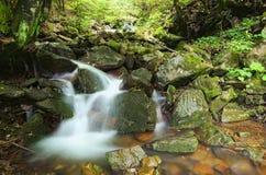 La petites cascade et pierre dans la belle vue de forêt profonde de la cascade aménagent en parc Zakarpattya, Ukraine images stock