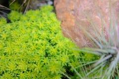 La petites plante verte et roche décorent au sol dans la plante d'intérieur photos stock
