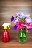 La petunia fiorisce in un lanciatore di vetro con la bottiglia dello spruzzo Immagine Stock Libera da Diritti