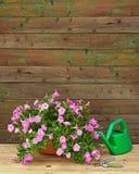 La petunia rosada florece en maceta con los accesorios del jardín Fotografía de archivo libre de regalías