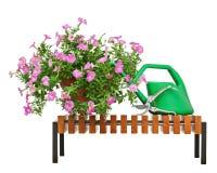 La petunia rosada florece en maceta con los accesorios del jardín Imagen de archivo libre de regalías