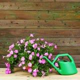 La petunia rosada florece en maceta con los accesorios del jardín Imagen de archivo