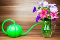 La petunia variopinta fiorisce in un lanciatore di vetro con l'annaffiatoio Immagini Stock