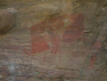 La phacochère dessinée sur le mur Image libre de droits