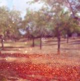 La photo abstraite brouillée de l'éclat de lumière parmi les arbres et le bokeh de scintillement s'allume Image filtrée Image stock