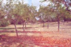 La photo abstraite brouillée de l'éclat de lumière parmi les arbres et le bokeh de scintillement s'allume Image filtrée Photo stock