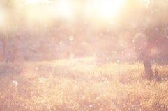 La photo abstraite brouillée de la lumière a éclaté parmi des arbres Image libre de droits