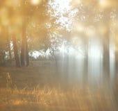 La photo abstraite brouillée de la lumière a éclaté parmi des arbres Images stock