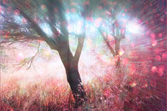 La photo abstraite de l'éclat de lumière parmi les arbres et le bokeh de scintillement s'allume l'image est brouillée et filtrée Photographie stock libre de droits