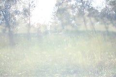La photo abstraite de l'éclat de lumière parmi les arbres et le bokeh de scintillement s'allume l'image est brouillée et filtrée Photo libre de droits