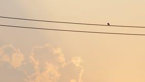 La photo courante - silhouettez un oiseau se reposent sur un fil électrique Images libres de droits