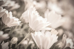 Fond floral doux Images libres de droits
