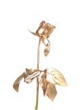 La photo de la belle rose d'or. Image stock