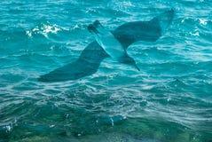 La photo de la belle surface claire de l'eau d'océan de mer de turquoise avec le bas d'ondulations ondule sur le fond et la mouet Image stock