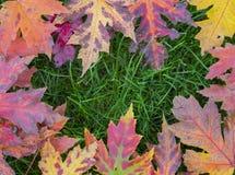 La photo de la vie des feuilles d'automne d'automne créait toujours pour aimer un cadre Images stock