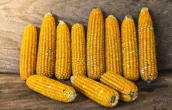 La photo de maïs, maïs de la Thaïlande Photos stock