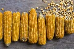 La photo de maïs, maïs de la Thaïlande Image libre de droits
