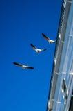 La photo est faite pendant le voyage à travers la mer baltique en le bateau de moteur photo libre de droits